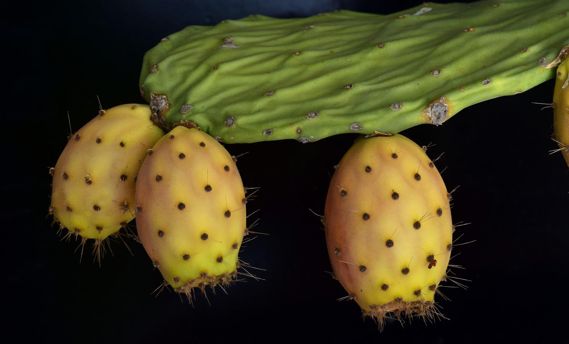 Kaktusfrüchte: Perfekt in der exotischen Küche auf gutshausblog.de